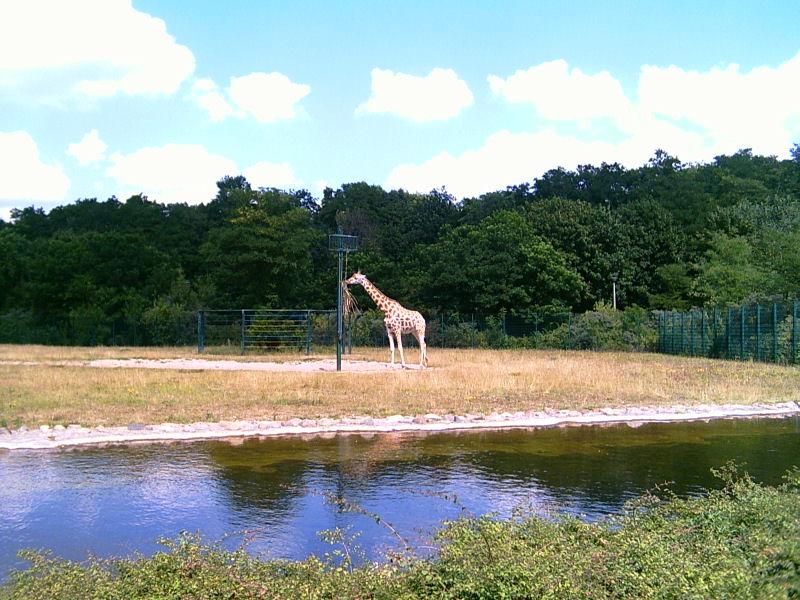 Zisterne und Giraffe
