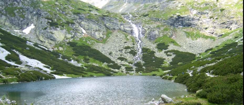 Von der Natur lernen: Regenwasserbecken